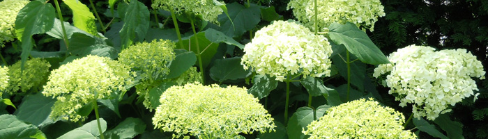 http://www.kroontuinontwerp.nl/wp-content/uploads/2011/06/foto-slider-023.jpg